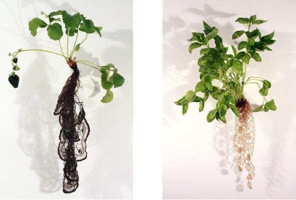 Left : Strawberry Noir (Fragaria Fusca Tenebris) Right : Basil n° 5 (Ocimum Basilicum Rosa)
