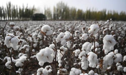A cotton field in Awat County Xinjiang Uygur Autonomous Region