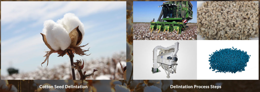 Cotton Seed Delintation Process Steps