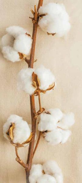 togo-cotton