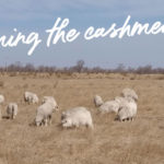 The List of Good Cashmere Standard Certified Spinning Mills
