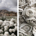 GM Cotton Effects on Biodiversity